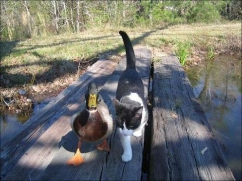 Duck&Cat