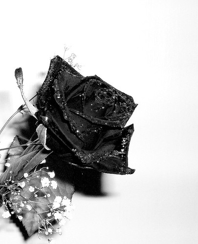 roses-noires