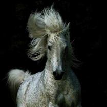 horse[1]